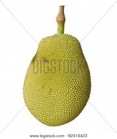 Jack Fruit On White Background