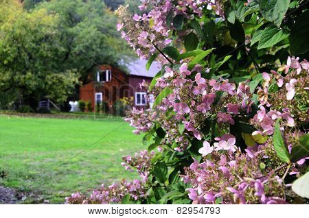 Flowers in a country setting