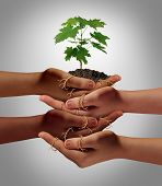 Community cooperation concept and social crowdfunding investment symbol as a group of diverse hands nurturing a sapling tree with roots wrapped and connecting the people together. poster