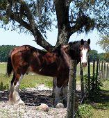 Horse in Alachua, Florida poster