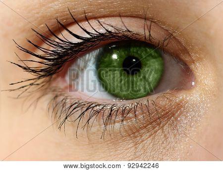 Close up green eye with makeup