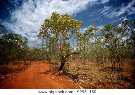 A red dirt road and blue sky in a typical bush scene in Kakadu National Park Northern Australia. poster