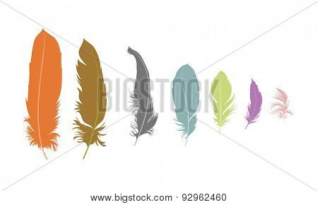 some feathers on white background