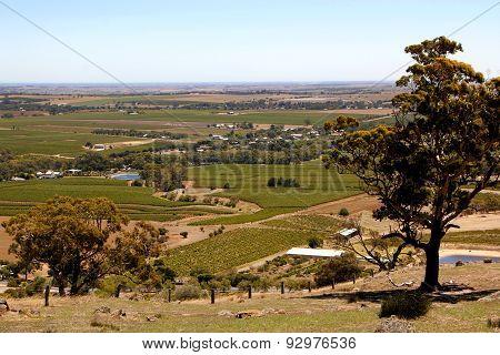 Barossa Vineyards Landscape