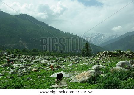 Himalayan ravine