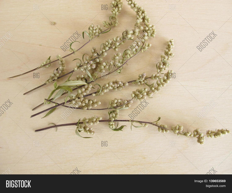 Dried Mugwort Tea Image & Photo (Free Trial) | Bigstock