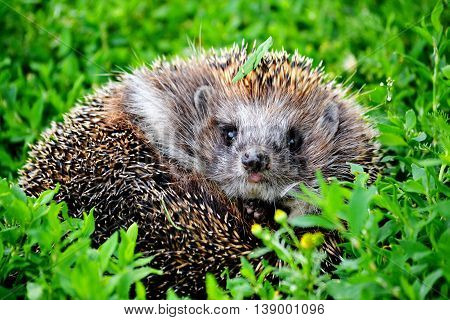 Wild animals present greater group an animal inhabitting steepe and timber regions Altaya