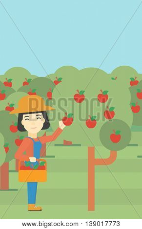 An asian female farmer holding a basket and collecting apples in fruit garden. Farmer collecting apples. Vector flat design illustration. Vertical layout.