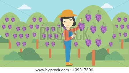 An asian female farmer harvesting grapes in vineyard. Farmer collecting grapes. Young farmer working in vineyard. Vector flat design illustration. Horizontal layout.