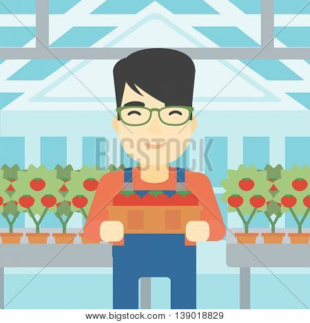 An asian farmer holding a box with tomatoes on the background of greenhouse. Young farmer collecting tomatoes in the greenhouse. Vector flat design illustration. Square layout.