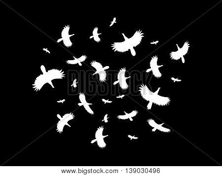 A flock of birds flying in a circle on a black background. Vector illustration.