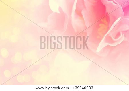 Double Exposure Of Light Petal Flower With Defocused Light Bokeh In Soft Color And Blurred Style For