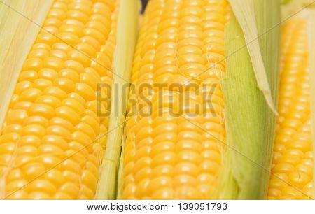 Young corn cob close up corn grain
