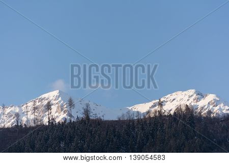 snowy mountains and forests of the Dachstein region