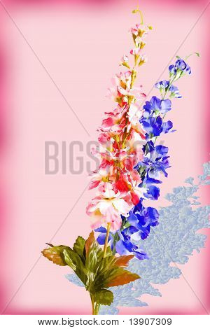 Two flowers vector illustration