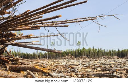 Huge section of trees that have been clear cut in Canada