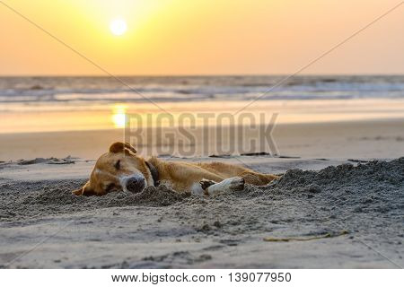 lazy dog relaxing and sleeping on sand beach, sunset time