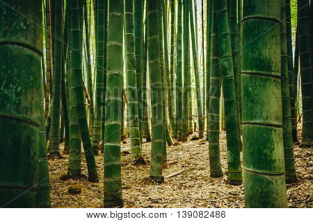 Bamboo Forest At Arashiyama, Kyoto, Japan.
