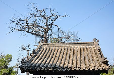 An ancient cyrpres tree and the top of a Chinese style roof within the Confucius Temple in the city of Qufu in Shandong Province China.