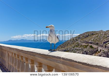 Seagull stands on the railing against the background of seascape with rocks, Seagull on the railing