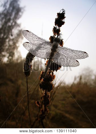 Drops of morning dew on a dragonfly closeup.