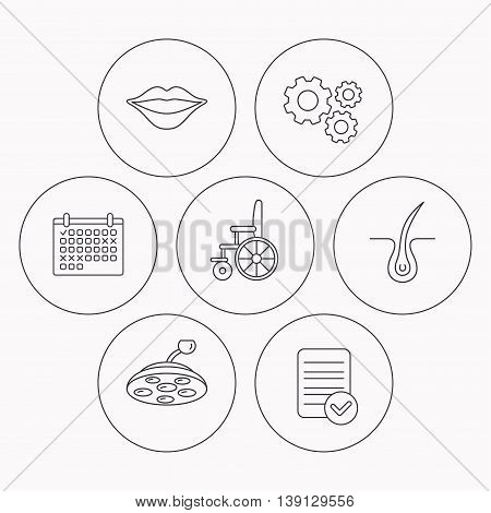 Trichology, surgical lamp and wheelchair icons. Lips linear sign. Check file, calendar and cogwheel icons. Vector poster