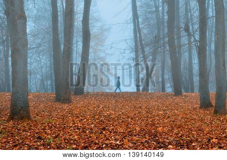 Autumn nature -foggy autumn view. Autumn park in dense fog with ghostly silhouette- autumn landscape with autumn trees and orange fallen leaves. Autumn park in dense autumn fog. Soft focus applied.