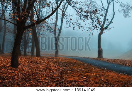 Autumn nature -foggy autumn view. Autumn park alley in dense fog - foggy autumn landscape with bare autumn trees and orange fallen leaves. Autumn alley in dense autumn fog. Soft filter applied.