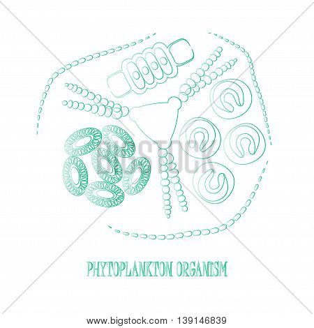 Phytoplankton. Vector illustration with small organism of phytoplankton on environmental biologicall nature wildlife theme.