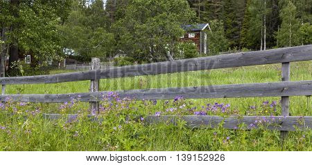 Wooden fence, wildflowers, cranesbill on a slope. Homestead, timber building in the background.