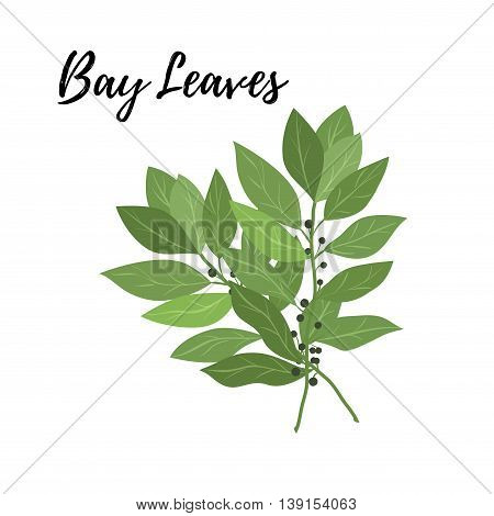 Isolated branches of herbs bay leaves aroma herbs vector object on white background. Kitchen seasoning spices.Vektor illustration.
