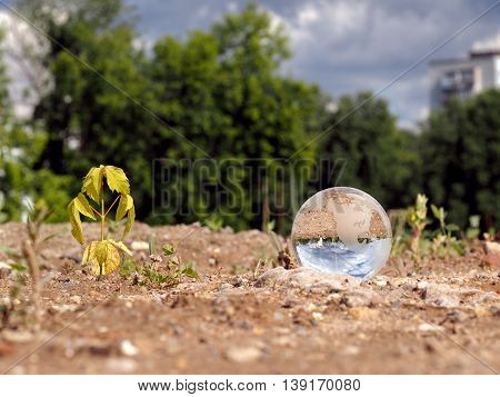 Dry germ wilted and transparent ball in a vacant lot. In the bowl of a building reflects the city blue sky. The concept of urban ecology drought environmental protection in the construction of houses