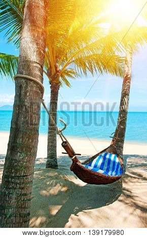 Empty hammock between palms trees at sandy beach. View of nice tropical beach with palms around. Holiday and vacation concept
