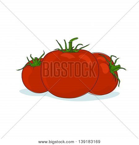 Vegetables Tomatoes Isolated on White Background, Three Kinds Red Tomato, Vector Illustration