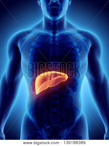 3D Illustration Of Liver.