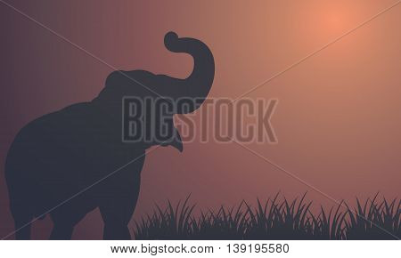 Landscape elephant in fields silhouettes vector illustration