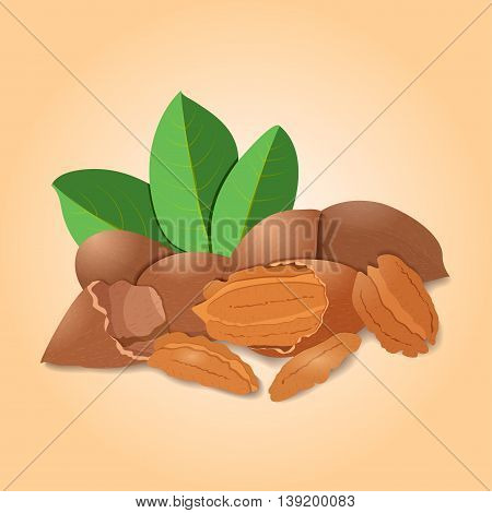 Vector illustration pecan nut. A handful of shelled pecans nuts in shell and shelled, leaves. Tasty Image on beige background nuts for printing on packaging, advertising of healthy foods