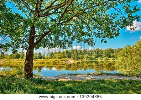 River Landscape With Green Forest Woods On Coast And Reflections Of Trees In Water. Summer Sunny Day. Blue Sky. Nobody. Oak Tree On Foreground.