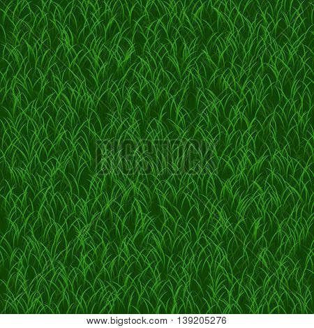 Perfect lawn background. Realistic green grass background. Beautiful fresh lawn grass texture. Vector illustration for your design.