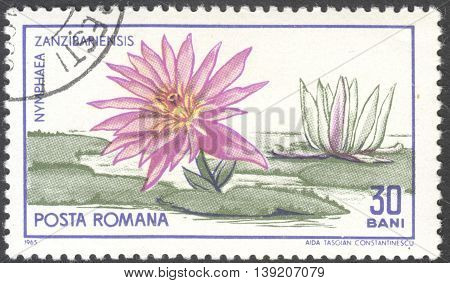 MOSCOW RUSSIA - CIRCA JANUARY 2016: a post stamp printed in ROMANIA shows a flower Nymphaea Zanzibariensis the series