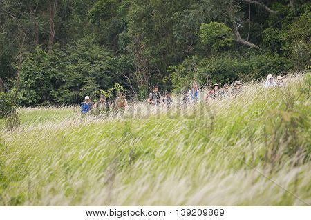 Nakorn Ratchasrima Thailand - July 14 2016: Travelers trekking on green thatched meadow in Khao Yai national park. Foreground is blurry moving grass flower and dark green forest as background.