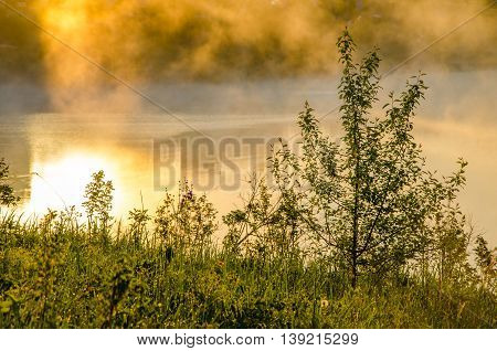 Thick Morning Fog In The Summer Forest