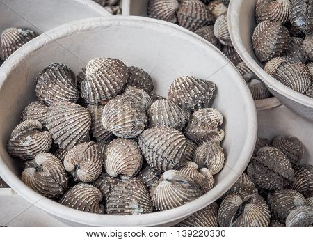 Fresh cockles in market, Thailand / Seafood image