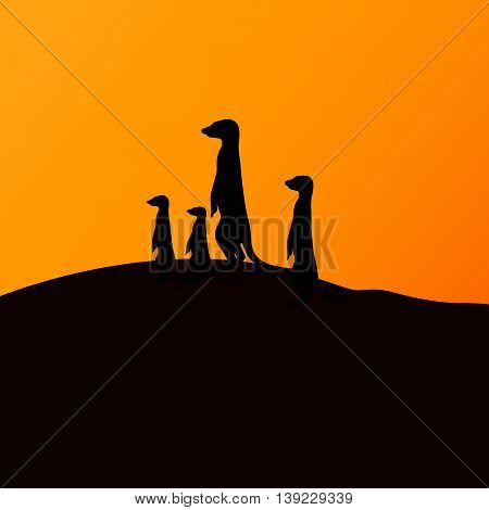 Vector illustration of a group of meerkats watching the sunset. Silhouette of a meerkat.
