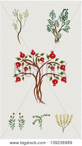 pomegranate, bush, bough, green, plant, flower, tree
