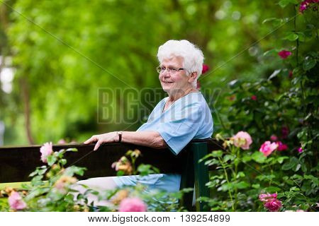 Happy senior lady sitting on wooden bench blooming rose garden. Grandmother picking fresh flowers. Retired elderly woman gardening on sunny summer day. Active retirement and health care concept.
