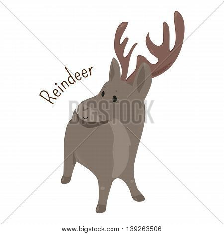 Reindeer isolated on white background. Rangifer tarandus. Caribou. Antlers are typically larger on males than females. Part of series of cartoon northern animal species. Child fun pattern icon. Vector