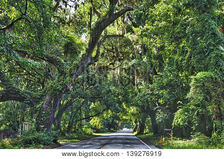 The road to Edisto Beach, through rural South Carolina, passes through lots of