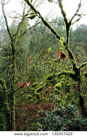 Moss overgrown branches in Multnomah Falls, Columbia River Gorge, Oregon, USA.
