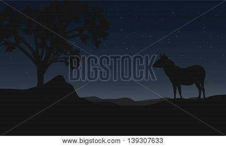 Zebra at night landscape silhouettes vector illustration